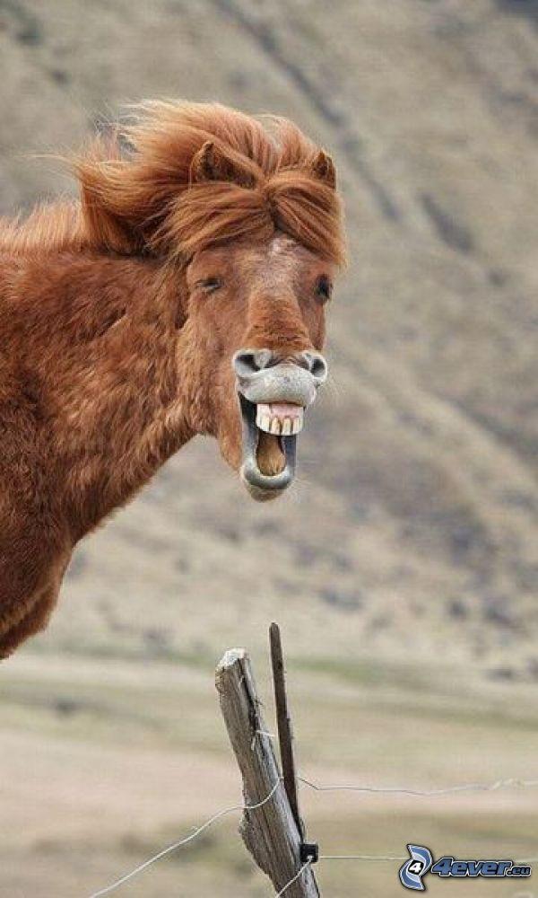 happy horse, fence, teeth