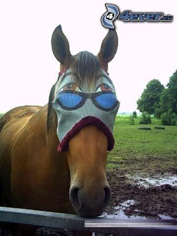 horse, mask, eyes