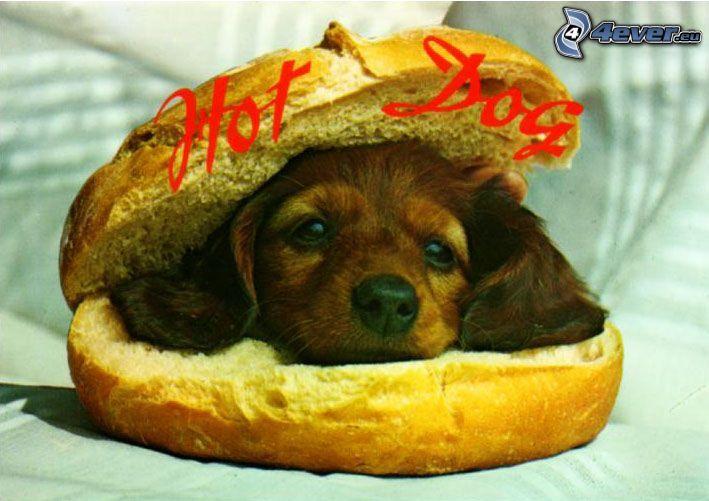 hot dog, humburger, puppy