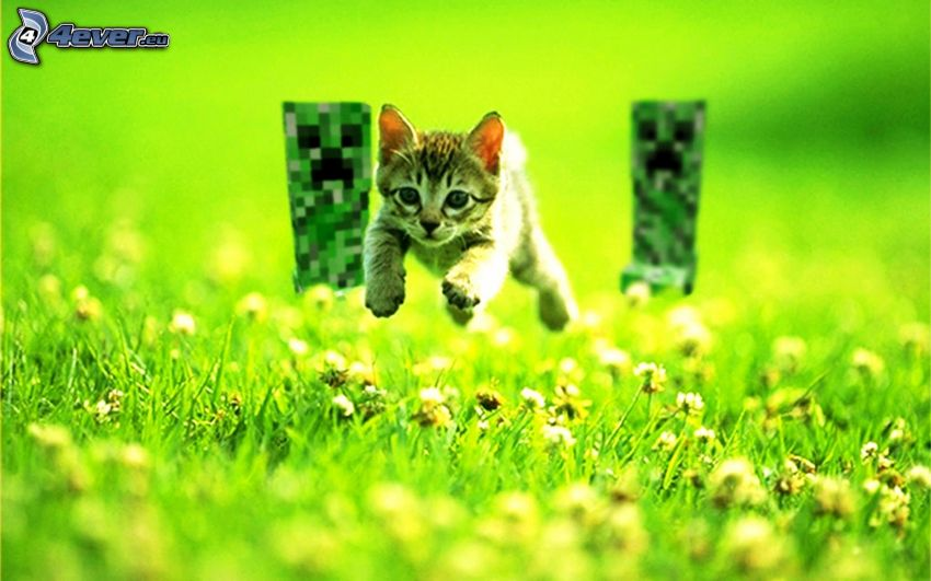kitten, jump, Creeper, monsters, Minecraft, grass