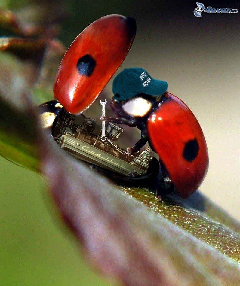 ladybugs, mechanic, engine, repair, Cadillac