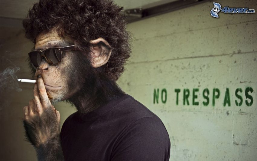 monkey, cigarette