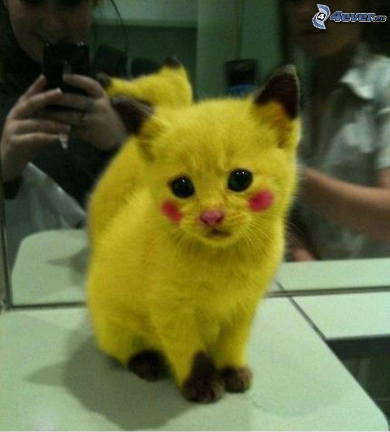 Pikachu, cat