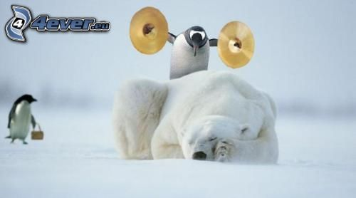 polar bear, penguin, sleep, courage, cymbals
