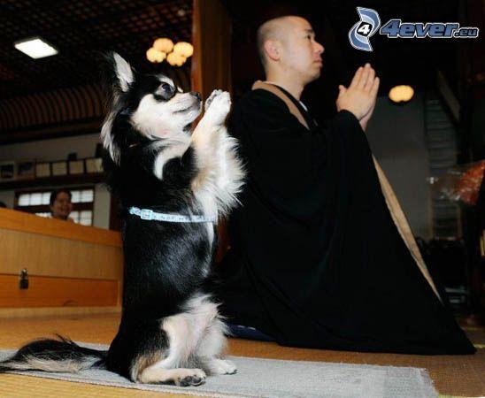 prayer, dog