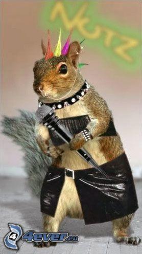 punker, squirrel