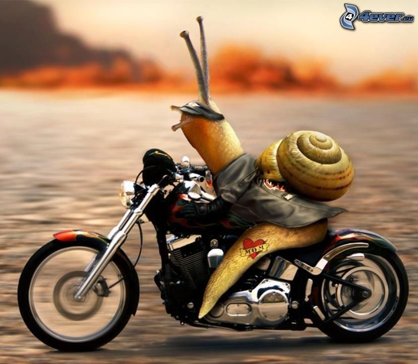 snail, motocycle, leather jacket, speed