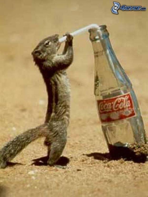 squirrel, Coca Cola, straw, sand