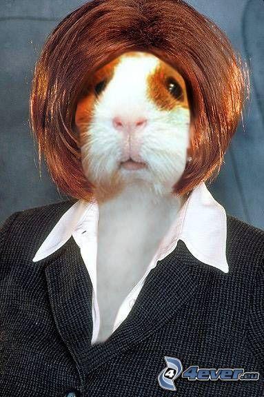 woman, hamster