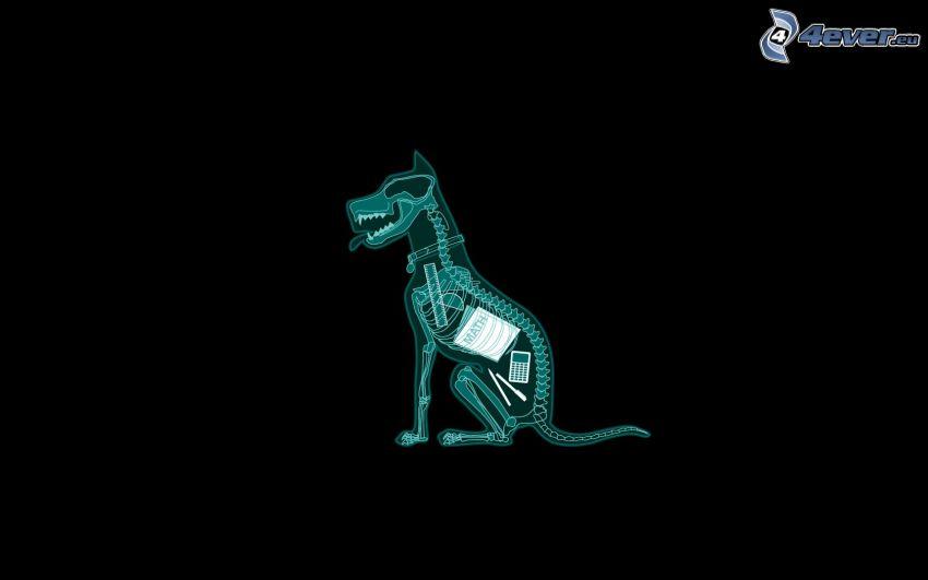 cartoon dog, skeleton, mathematics, calculator