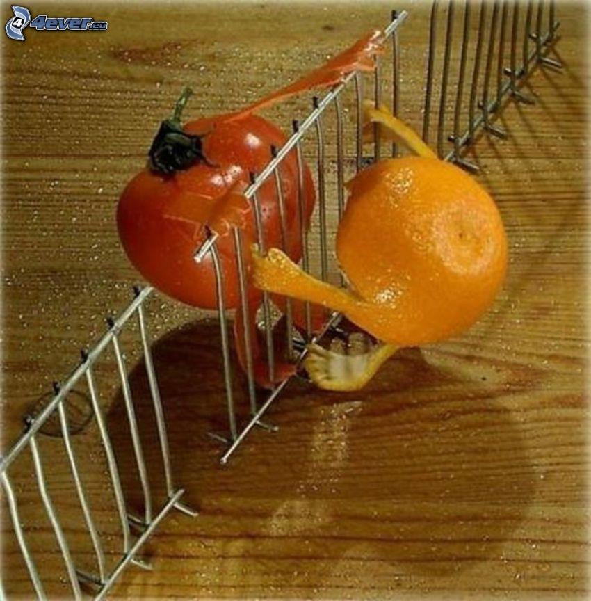 mandarine, tomato, fence
