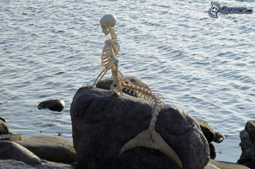 mermaid, skeleton, boulder, sea
