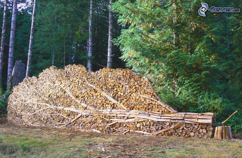 stacked wood, tree, coniferous forest