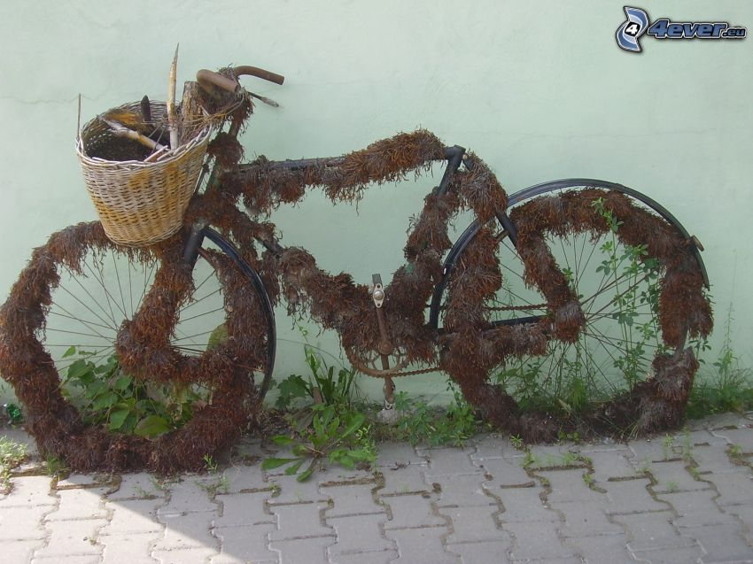 overgrown bicycle