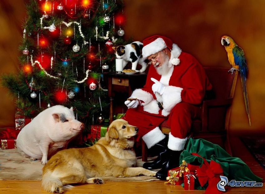 Santa Claus, pig, golden retriever, parrot, christmas tree, room, gifts