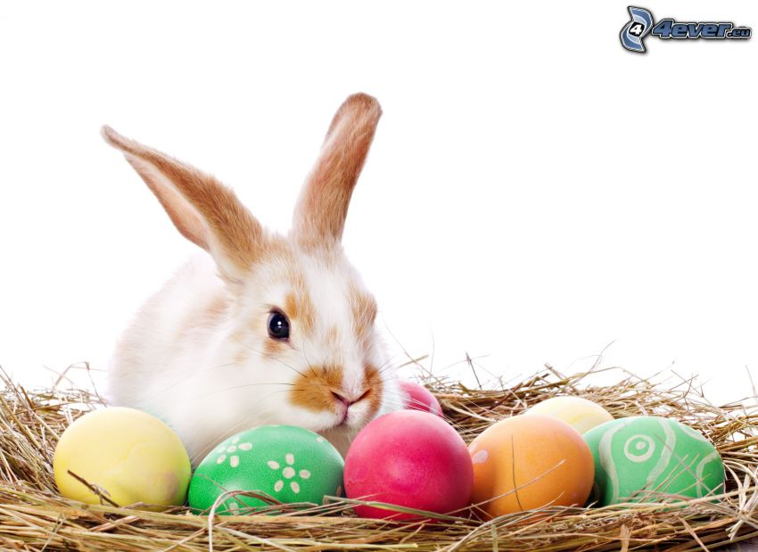 bunny, easter eggs, straw