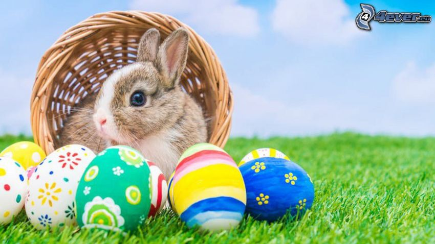 bunny, easter eggs in grass, basket
