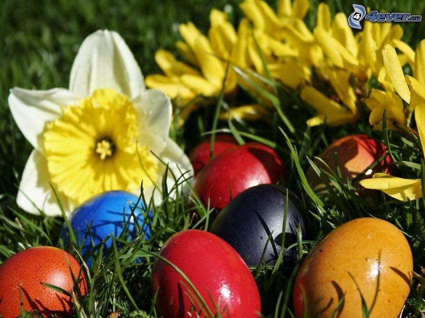 easter eggs, daffodil