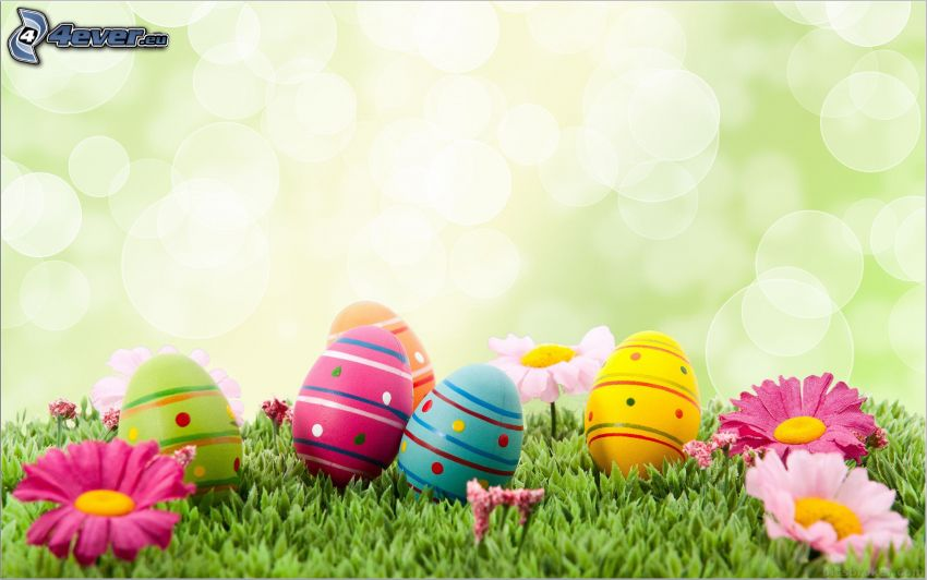 easter eggs, pink flowers