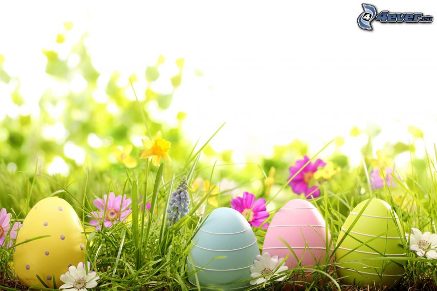 easter eggs, spring flowers, daffodils