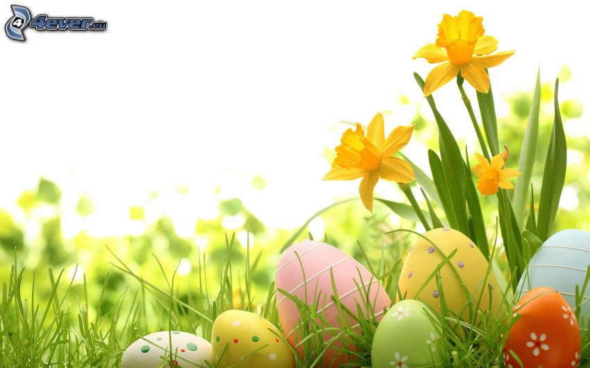easter eggs in grass, daffodils