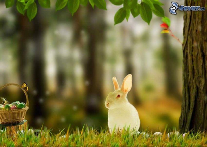 rabbit, easter eggs in grass, basket