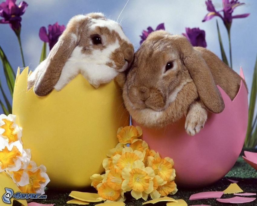spotted rabbits, easter eggs