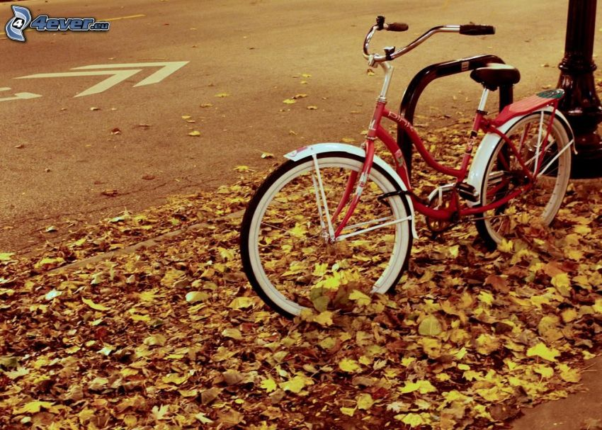 bicycle, yellow leaves