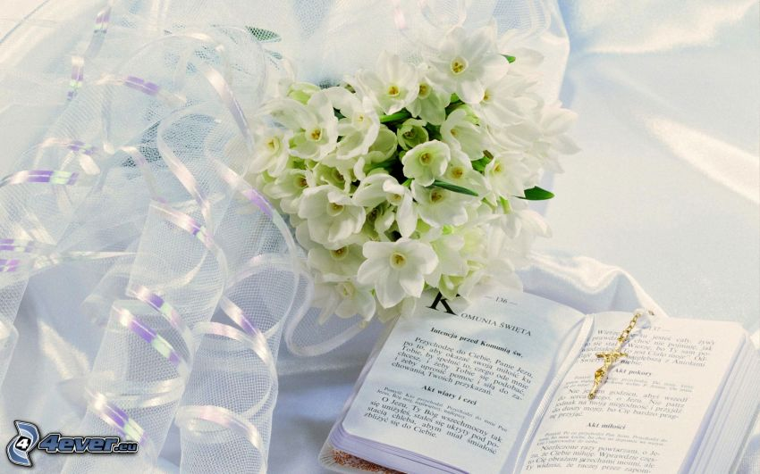 bouquets, white flowers, book, ribbon