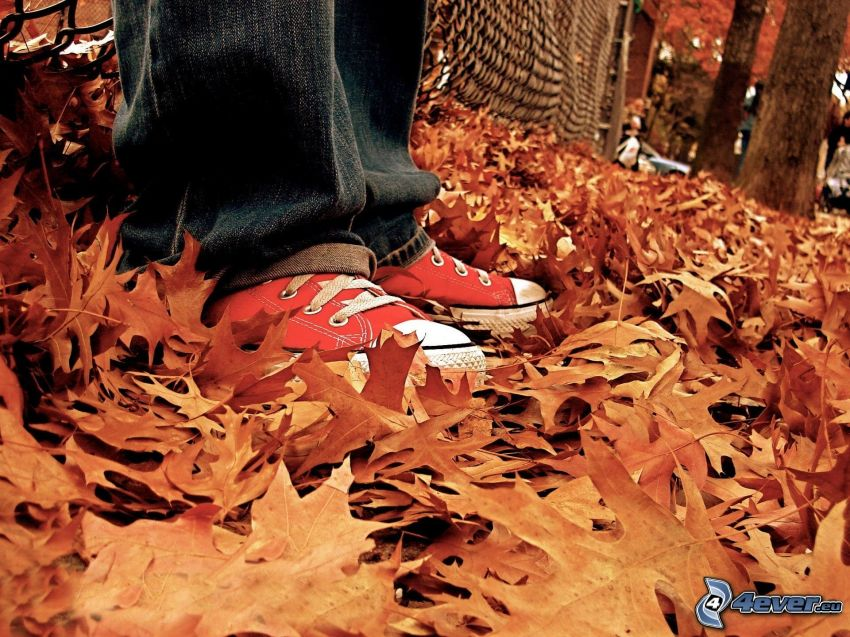 Converse, autumn leaves
