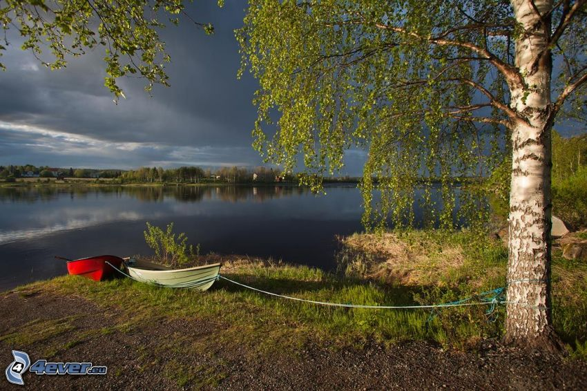 lake, boats, birch, shore