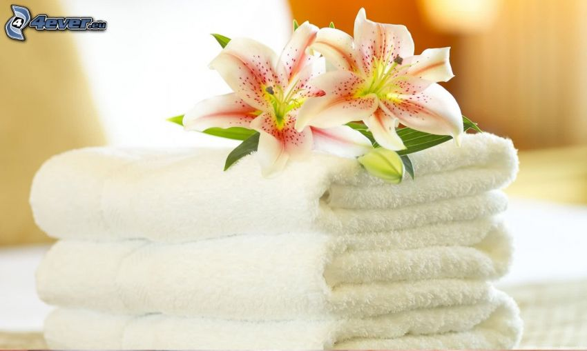towels, lily