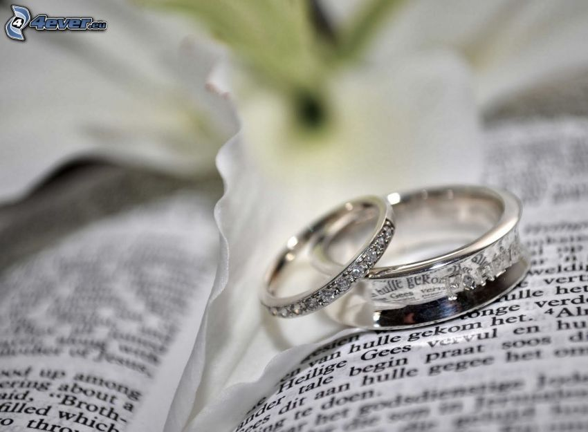 wedding rings, book, text