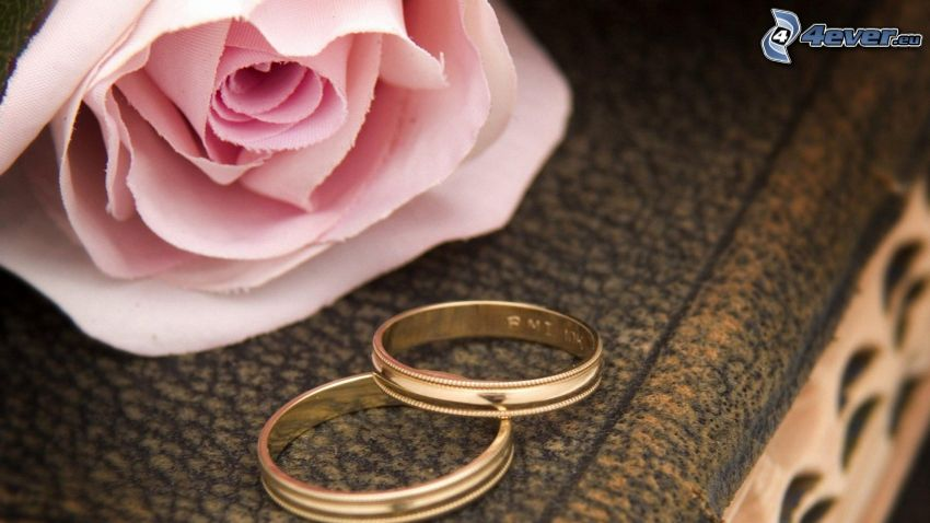 wedding rings, pink rose