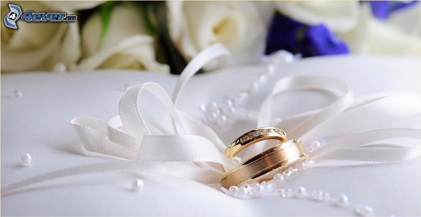 wedding rings, ribbon, white roses