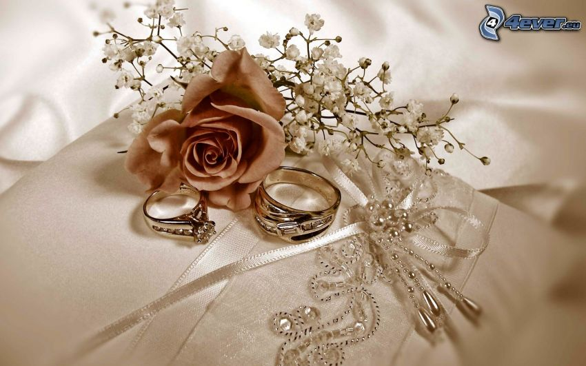 wedding rings, rose