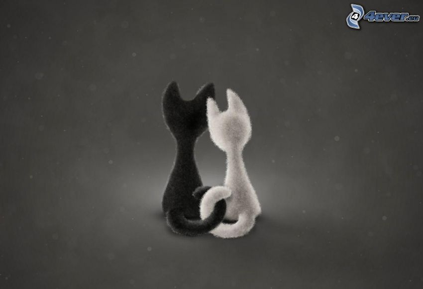 cats, couple