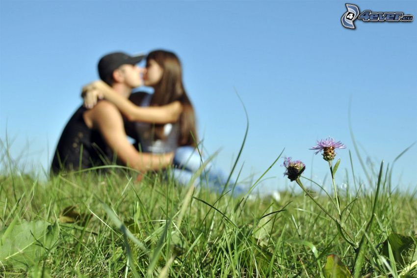 couple on meadow, grass