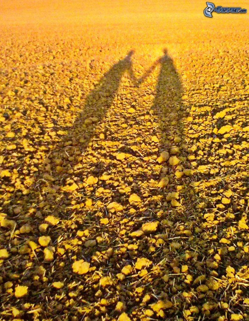 friends, shadow, field