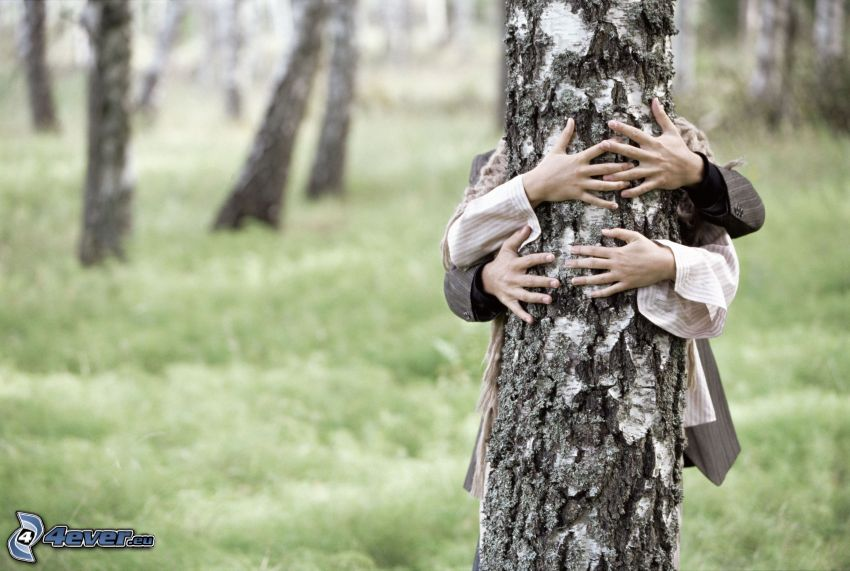 hands, couple, birch