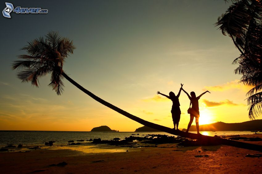 silhouette of couple, palm tree over sandy beach, beach at sunset, sea