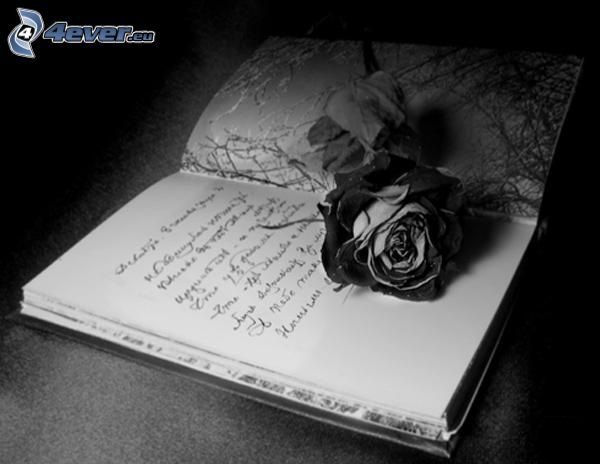 exercise book, rose, black and white
