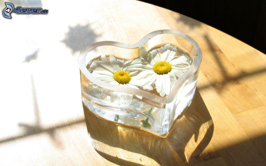heart, daisies