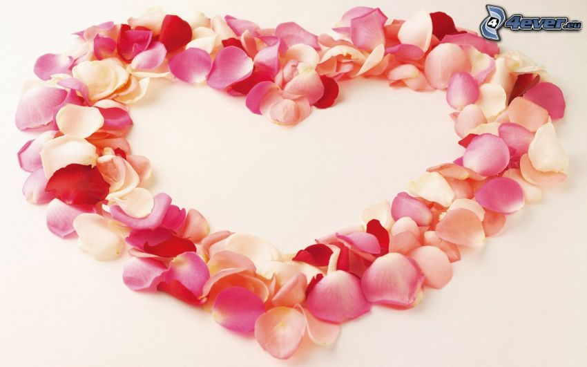 heart from the petals, love