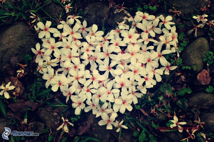 heart of the flowers