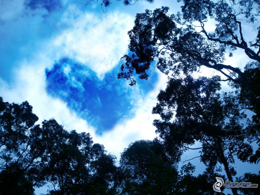 heart on the sky, cloud, heart, silhouettes of the trees