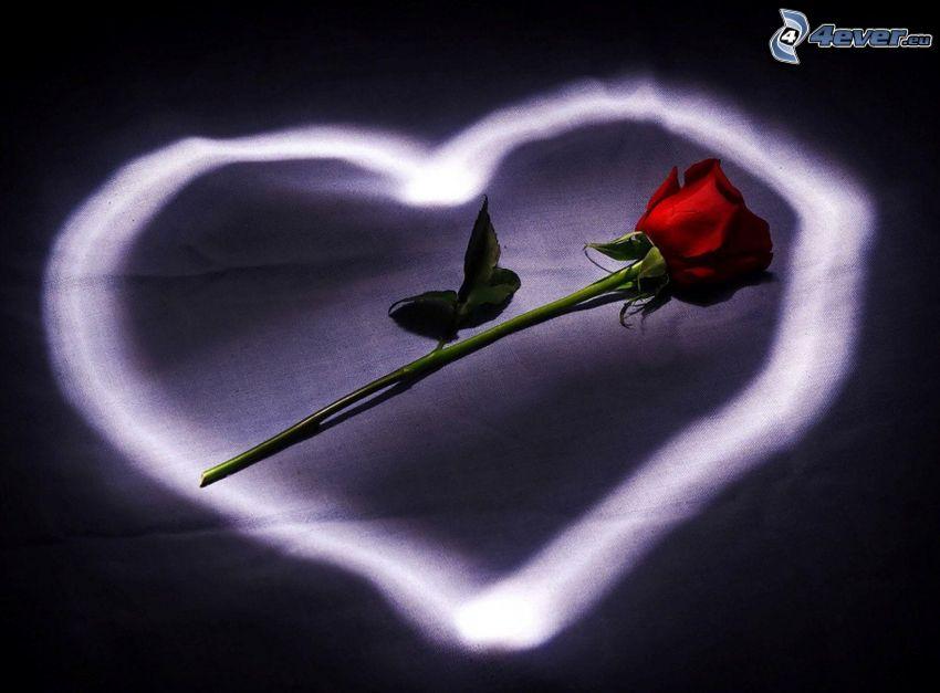 rose, heart