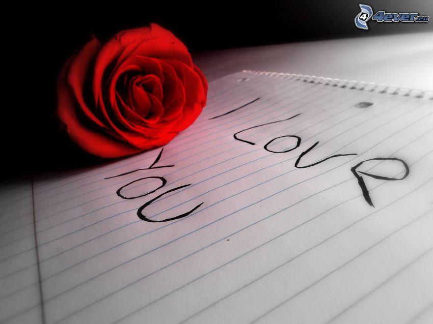 I love you, rose