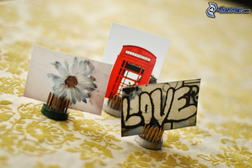 photos, white flower, telephone booth, love, graffiti
