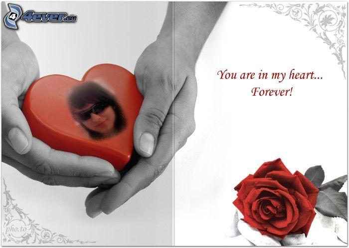 heart in hands, forever, rose